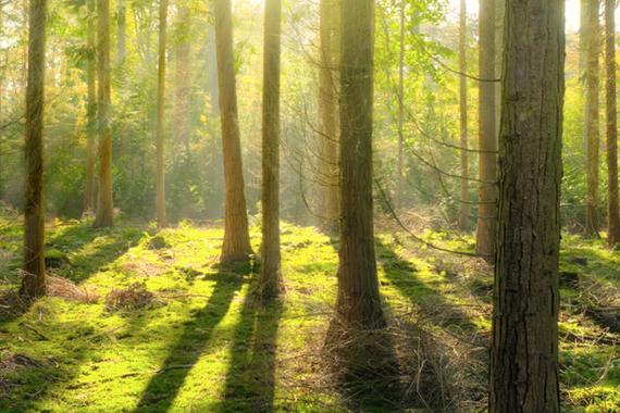 groen bos als symbool voor mooie duurzame keukens Boncquet